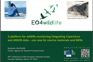European Cetacean Society 30th annual conference, Madeira 2016